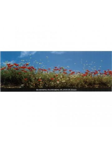 Floraison de plantes en Italie