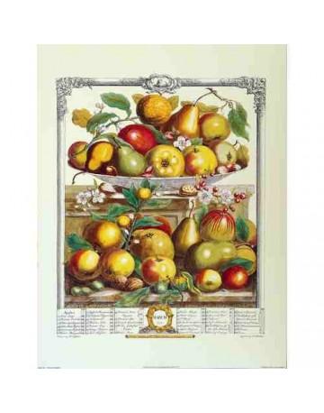 Pèle mèle de fruits Mars 1732