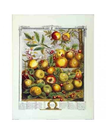 Pèle mèle de fruits Mai 1732