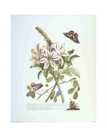 Fleurs et papillons 2