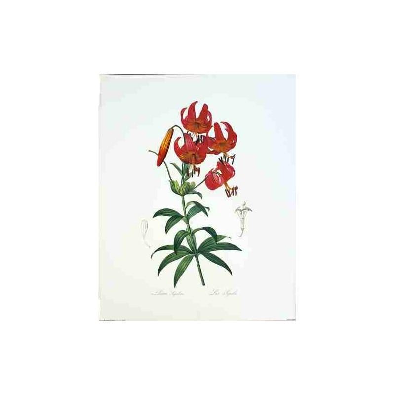 bouquet de lys rouge