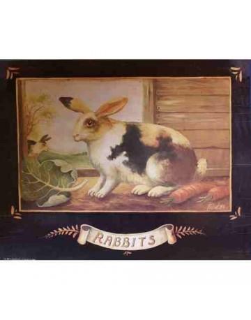 Lapin/rabbit