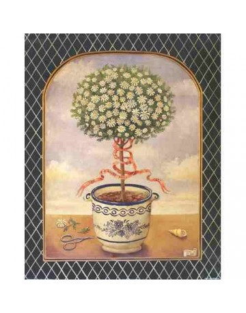 The white daisy tree/ l'arbre blanc de daisy