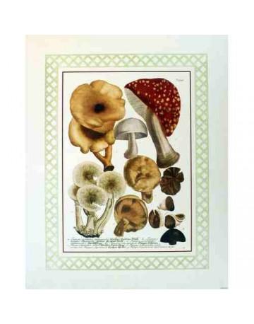 Différentes variètés de champignons