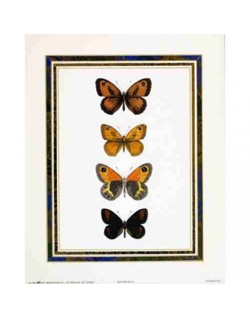 Papillons 4