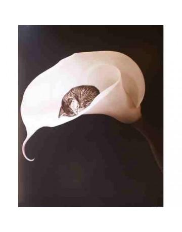 Photo chat sur fleurs blanche