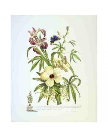 Plumeria/ fleurs et papillons
