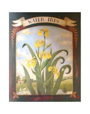 Iris / Water iris